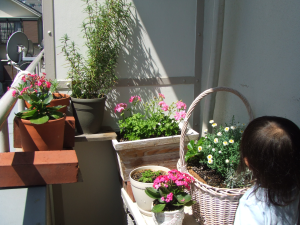 ベランダガーデニング,お花,