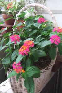 お花,ベランダガーデニング